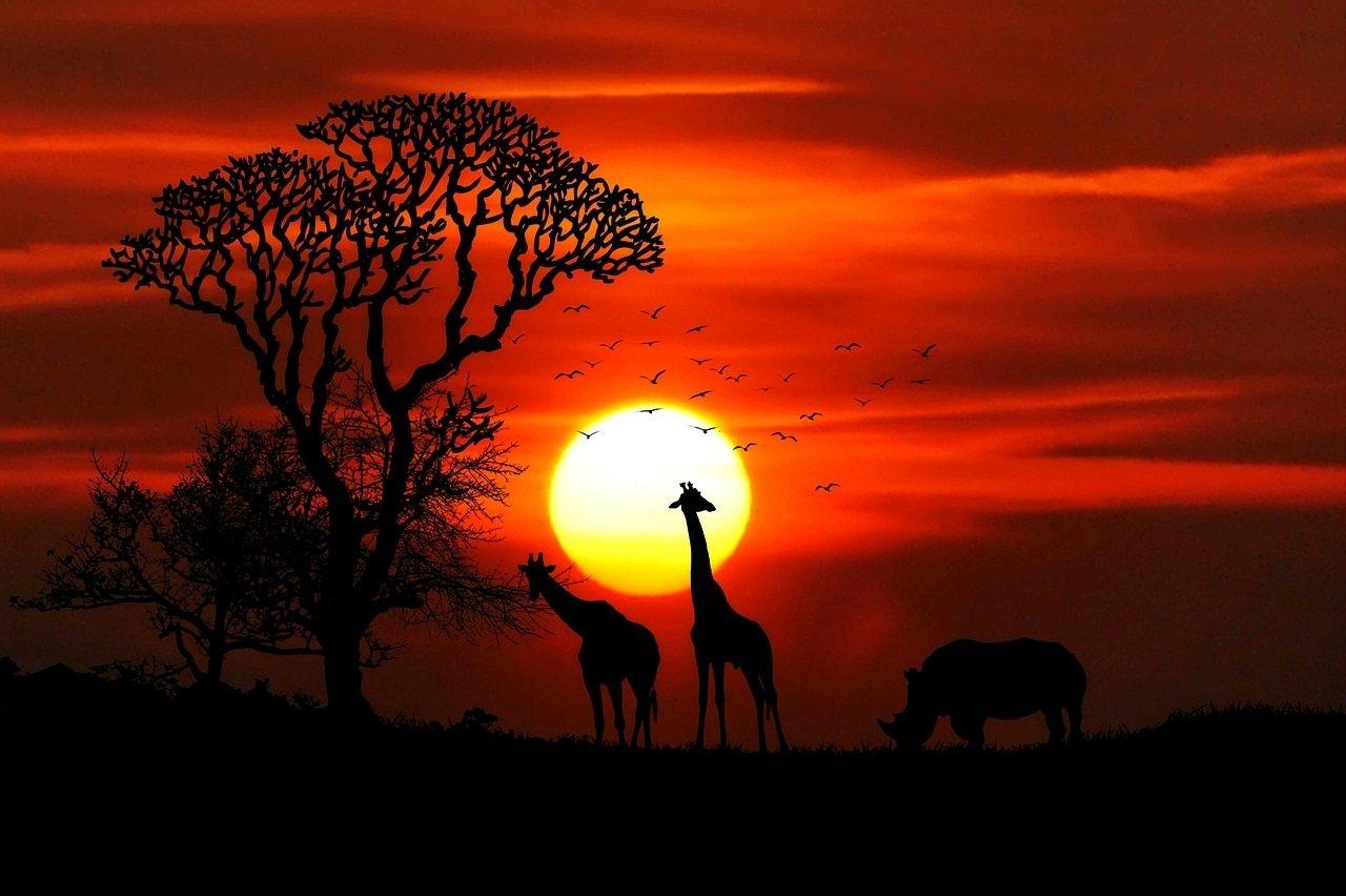 Tansania Sansibar ja Serengetin safari häämatka